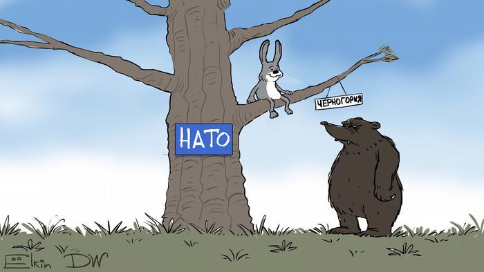 Медведь стоит у дерева с табличкой НАТО. На ветке с надписью Черногория сидит зайчик (карикатура)