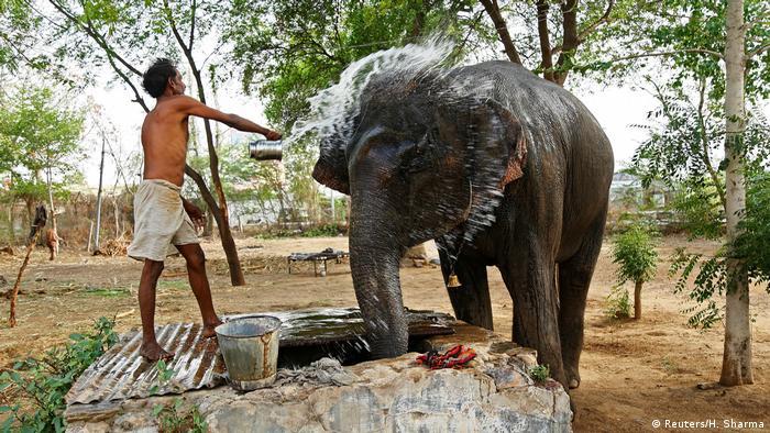 Indien - Hitzewelle - Alltag (Reuters/H. Sharma)
