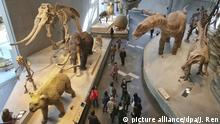 China Das Naturhistorische Museum in Shanghai (picture alliance/dpa/J. Ren)