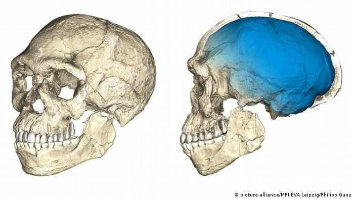 Max Planck Institut - Homo sapiens älter als gedacht (picture-alliance/MPI EVA Leipzig/Philipp Gunz)