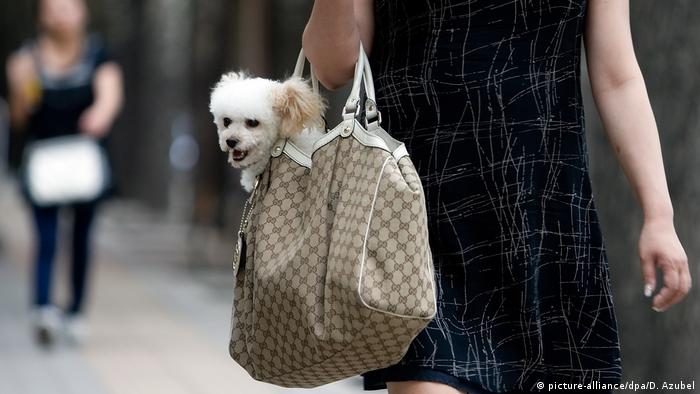 Hund in Handtasche (Foto: picture-alliance/dpa/D. Azubel)