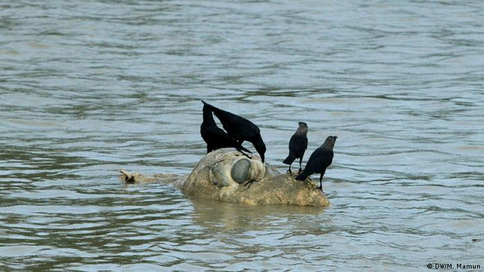 গবাদি পশুর মৃতদেহও নদীতে