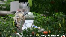 SHOUGUANG, April 21, 2012 A robot sprays pesticide on tomatoes during the 13th China (Shouguang) International Vegetable Sci-Tech Fair in Shouguang, east China's Shandong Province, April 20, 2012 |