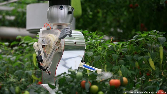 Robots que pulverizan pesticidas sobre plantas de tomate en la feria Sci-Tech, en China. (2012).