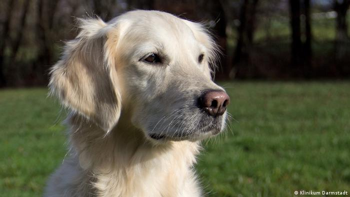 Don′t wait for sniffer dogs to screen you for cancer   Science  In