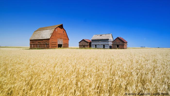 Old grain bins and red barn next to wheat field, near Regina, Saskatchewan, Kanada (picture alliance/All Canada Photos)