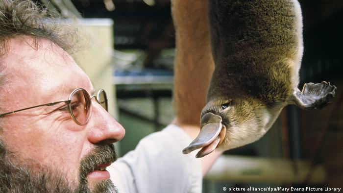 A scientist holding a platypus (picture alliance/dpa/Mary Evans Picture Library)