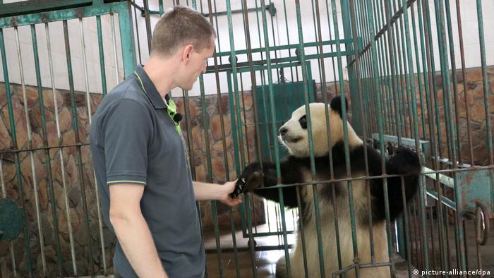 China Pandas für den Berliner Zoo (picture-alliance/dpa)