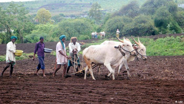 Farmers working in fields as monsoon begins in north Karnataka region of India
