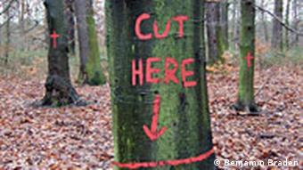 Bemalte Bäume im Kelsterbacher Wald