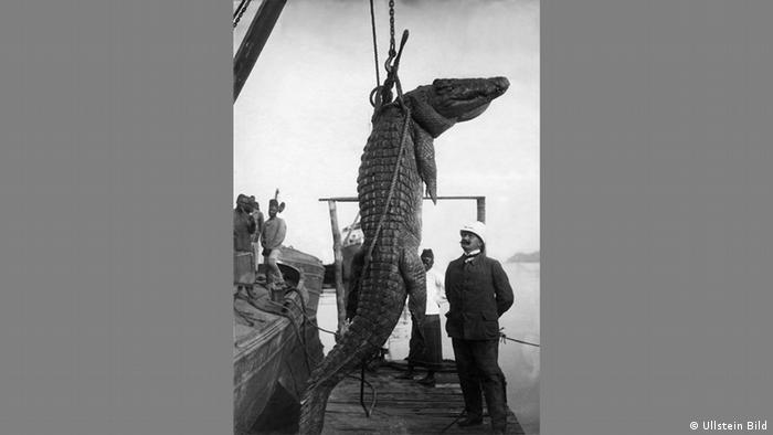Otto Haeckel and Georg Haeckel - Photo of a crocodile captured in East Africa in 1906 (Ullstein Bild)