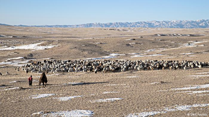 A herder sets off early in the morning to take his livestock to the daily grazing pasture in the Gobi desert (Photo: Jacopo Pasotti)