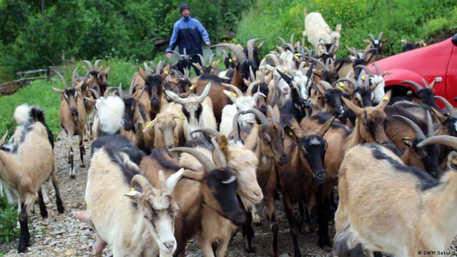 Ziegenzüchter aus Srebrenica