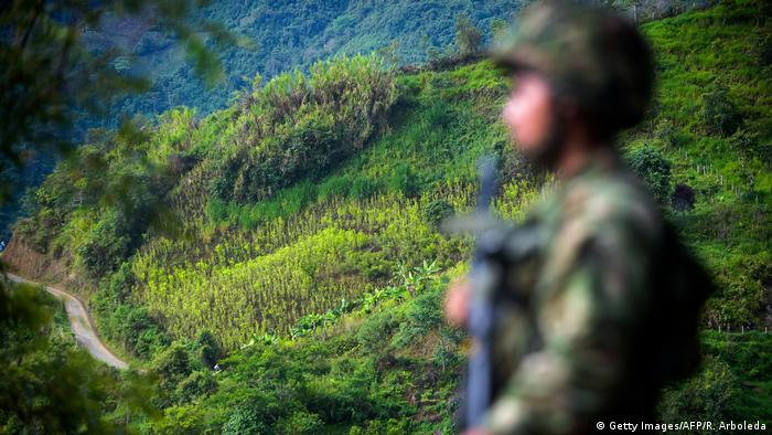 A soldiers stands guard in a coca field in Colombia