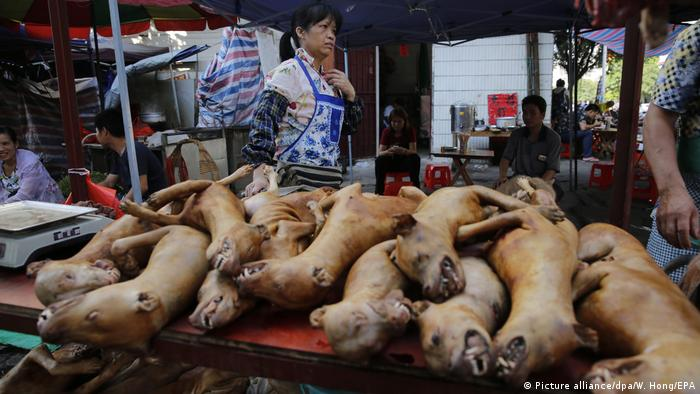 Demo gegen Dog-Meat-Festival (Picture alliance/dpa/W. Hong/EPA)