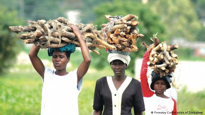 Women carry bundles of wood on their heads