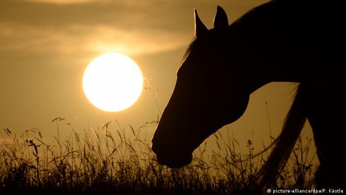 Deutschland BdT Pferd Sonnenuntergang (picture-alliance/dpa/F. Kästle)