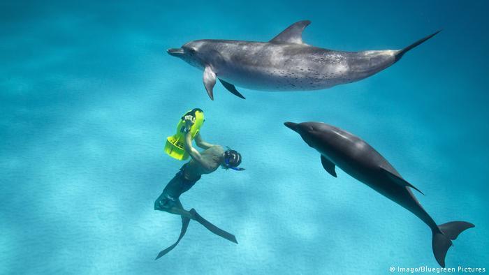 Frankreich Jacques Cousteau und seine Erfindungen Taucherin spielt mit Delfinen auf den Bahamas (Imago/Bluegreen Pictures)