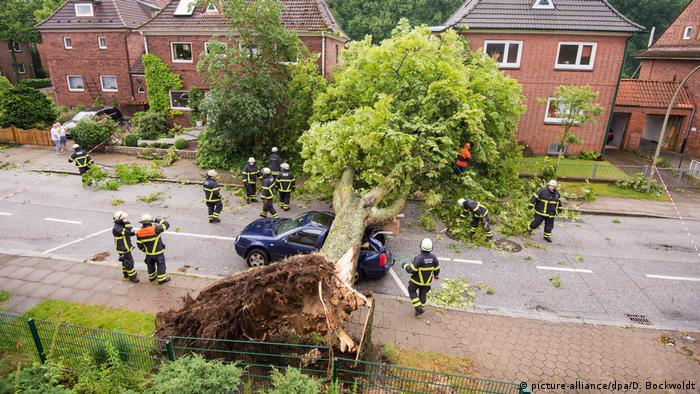 A blown-over chestmut tree in Hamburg, June 22 (picture-alliance/dpa/D. Bockwoldt)