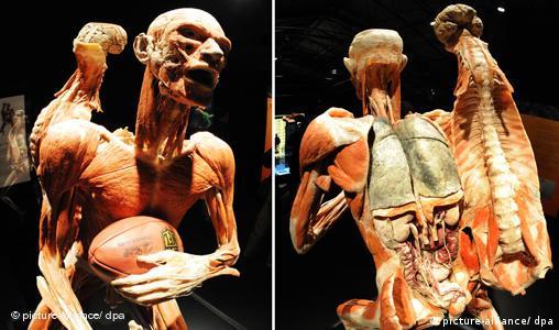 Ausstellung Körperwelten in Heidelberg freies Format