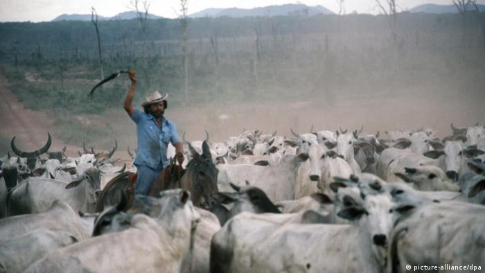 Entre 1974 e 1986, Volkswagen criou gado no sul do Pará