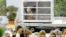 24.06.2017+++Berlin, Deutschland+++ Giant panda Meng Meng looks out of its container during a presentation after the arrival from China at the airport Schoenefeld near Berlin, Saturday, June 24, 2017. Two giant pandas from China have landed safely in Berlin where they are being welcomed by the German capital's mayor and the Chinese ambassador. Meng Meng and Jiao Qing were treated like royalty on their 12-hour-flight from Chengdu in southwestern China — their entourage included a Berlin veterinarian, two Chinese zookeepers and traveling press. The German capital is going nuts over the cute bears, which will first be presented to the public at the zoo on July 6. (AP Photo/Markus Schreiber)  