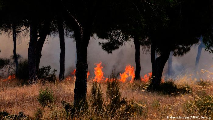 Spanien Waldbrand im Donana National Park (Getty Images/AFP/C. Quicler)
