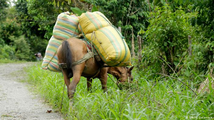 Donkey packed with bags