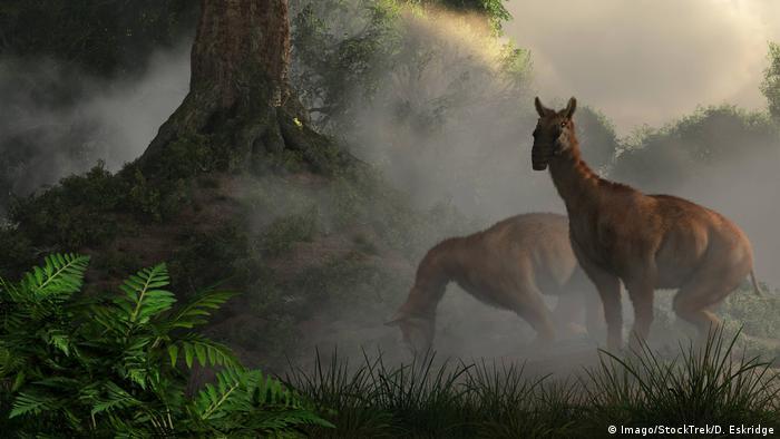 Macrauchenia grazing in a prehistoric forest