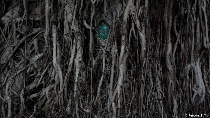 Placa ilegível sendo fechada por raízes
