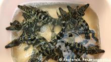 Thailand Krokodilfarm
