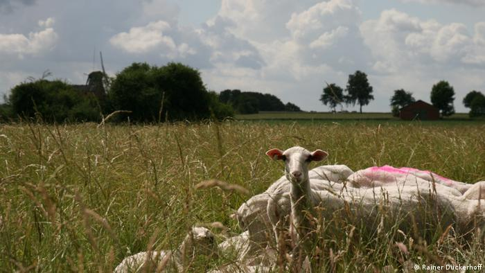 A herd of sheep in a field