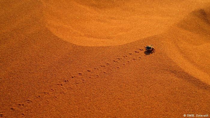 Namibia Namibwüste Käfer (DW/B. Osterath)
