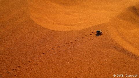 Beetle in the Namib desert (DW/B. Osterath)