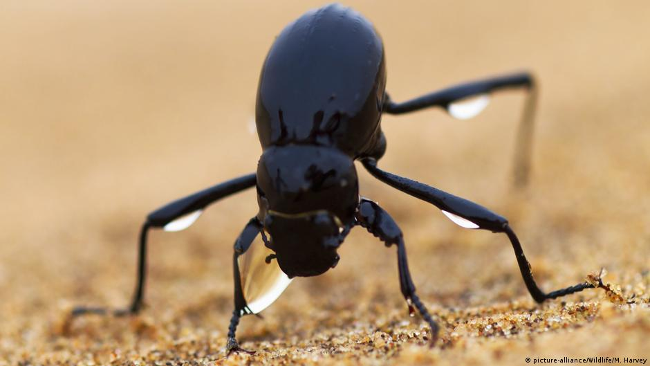giftigster skorpion