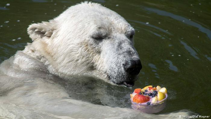 Tierpark Berlin Eisbaerin Tonja freut sich über die Eisbombe (Imago/Olaf Wagner)