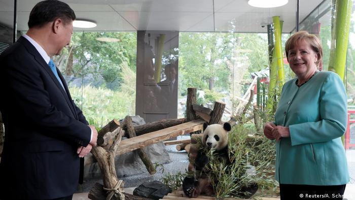 Xi Jinping & Angela Merkel with pandas (Reuters/A. Schmidt)
