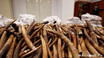 Hongkong konfiziert 7 Tonnen Elfenbein