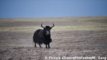 China Naturgebiet Hoh Xil als World Heritage Site von UNESCO anerkannt