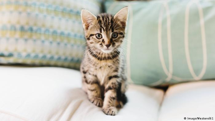 kitten on sofa (Imago/Westend61)