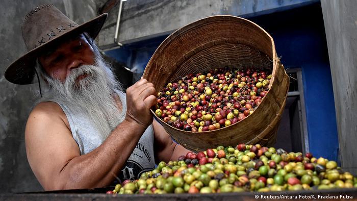 Petani kopi di desa Sumowono, Semarang, Jawa Tengah.