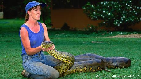 green anaconda (picture-alliance/OKAPIA KG)