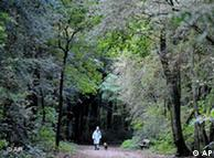 A woman and her dog are pictured as they walk through a wood near Hamburg, Germany