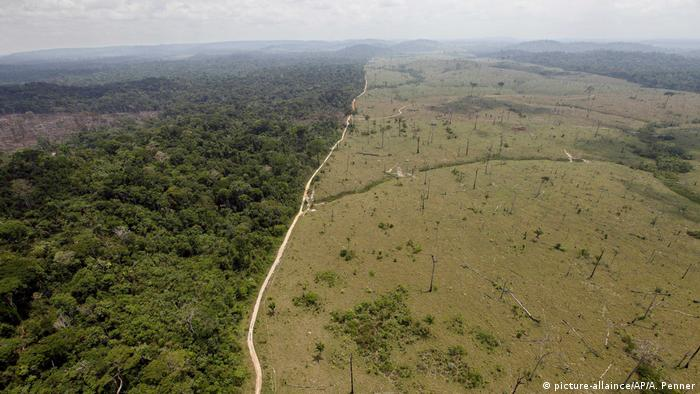 Deforestation in Brazil's northern state of Para (picture-allaince/AP/A. Penner)