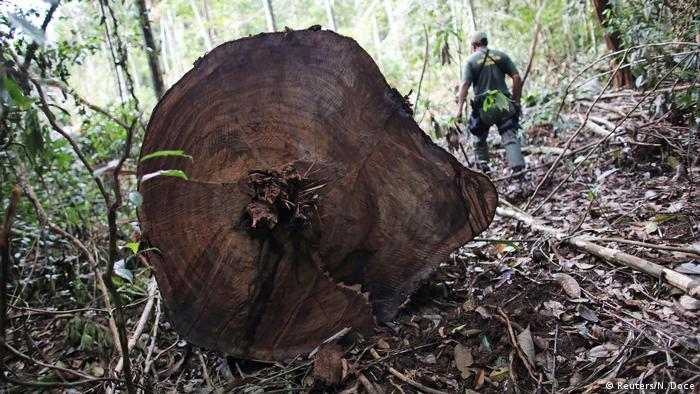 A military policeman walks past trunks of trees recently cut illegally from the Amazon rainforest