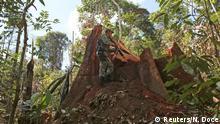 Brasilien Jamanxim Schutzgebiet Illegale Abholzung