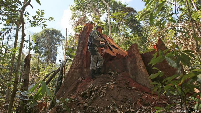 A police officer inspects a tree illegally felled in the Amazon rainforest in Jamanxim National Park near the city of Novo Progresso, Para State, Brazil (Reuters/N. Doce)