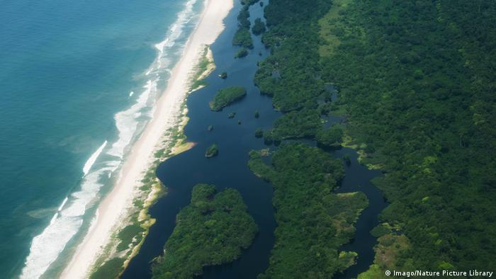 Aerialview of rainforest on the coast of Gabon