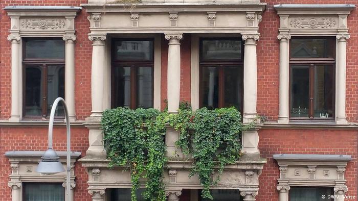 Плющ на балконі