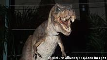 T-Rex Tyrannosaurus rex Jurassic Park (picture alliance/dpa/Arco Images)